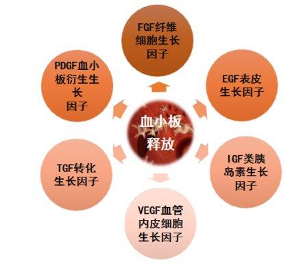富血小板血浆PRP如何在口腔种植领域大展身手